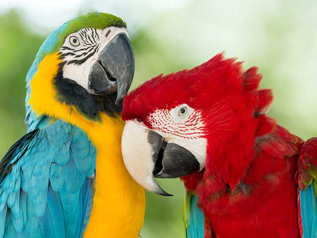 Oiseaux domestiques et sauvages