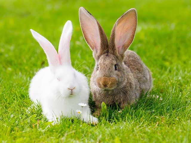 Rongeurs et lapins domestiques