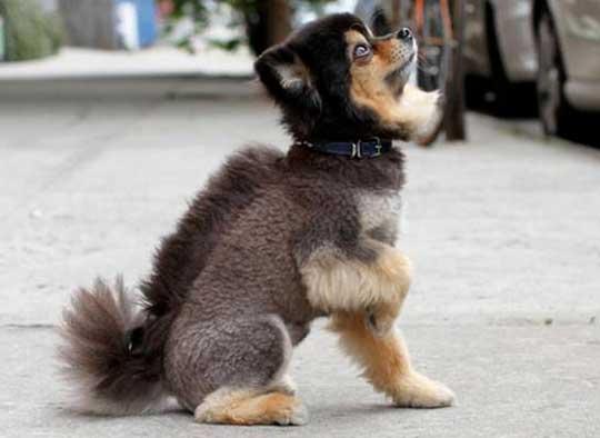 chien punk