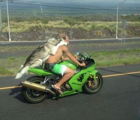 chien sur la moto