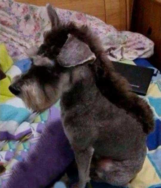 chien a un look punk