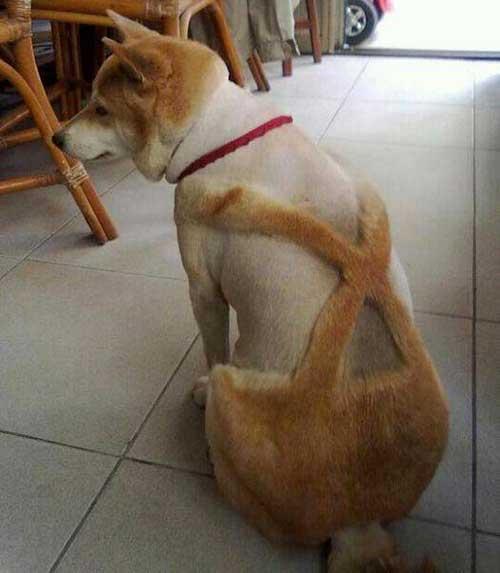 chien avec combinaison x-men