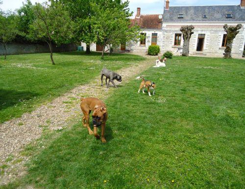 pension canine familiale Au bonheur des chiens