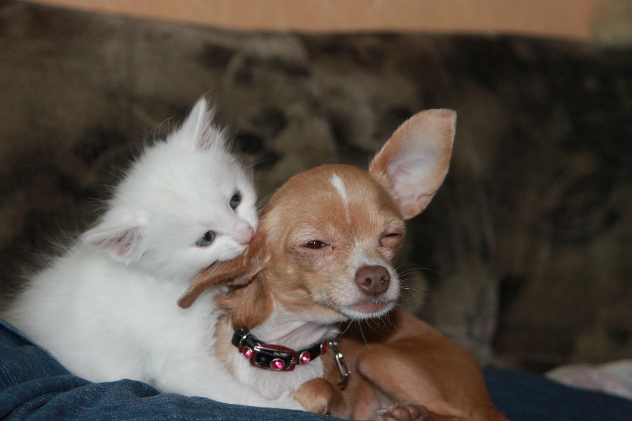 bisou entre chien et chat