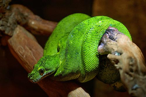 fonctionnement d'un terrarium à serpent
