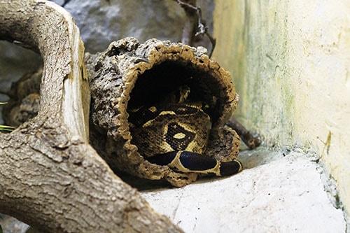 prix d'un terrarium pour serpent