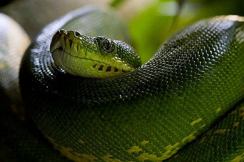 température terrarium pour serpent
