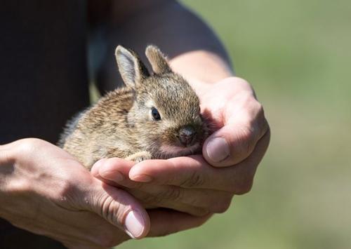 Protéger son lapin de la chaleur en été