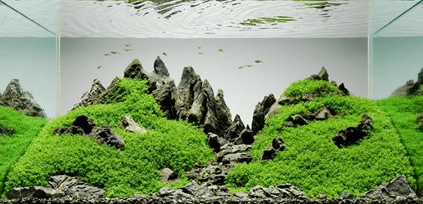 aquarium en aquascaping