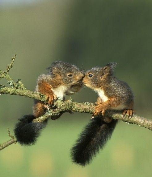 bisous d'écureuils
