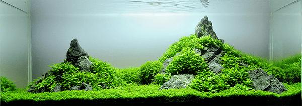 végétaux et plantes d'aquarium pour aquascaping