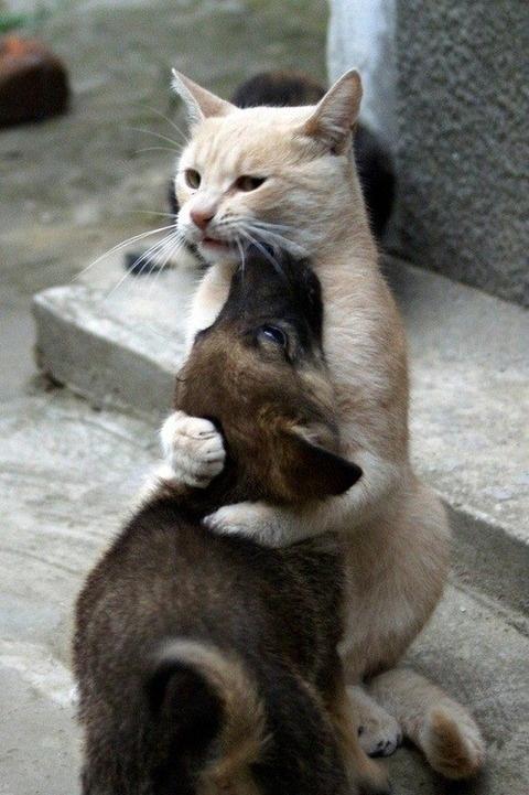 chiot et chat qui font un bisou