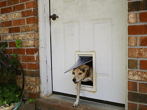 prévention incendie pour nos animaux domestiques