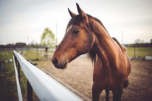 principe pension pour chevaux