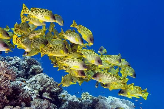 océans se vident de leurs poissons