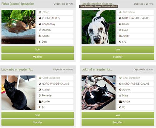 Comment Rechercher Une Annonce D Adoption D Un Animal Sur Anipassion