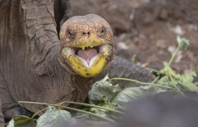 tortues de l'île Española sur Galapagos