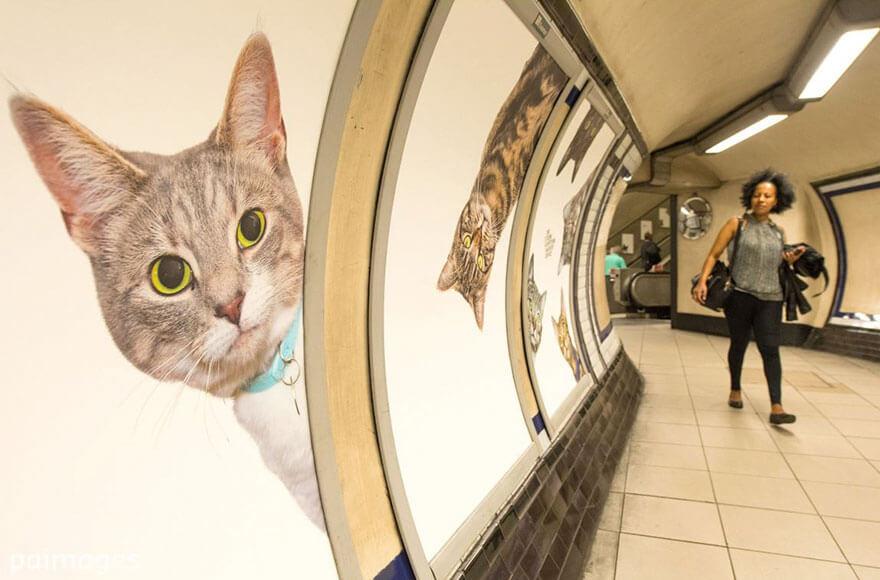 chats partout dans le métro de Londres