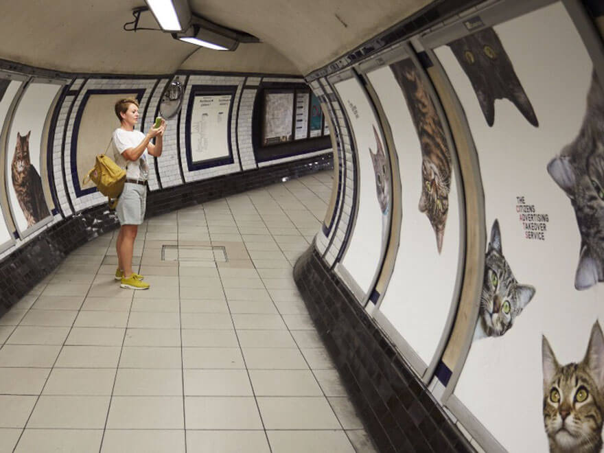 photos de chats dans métro de londres