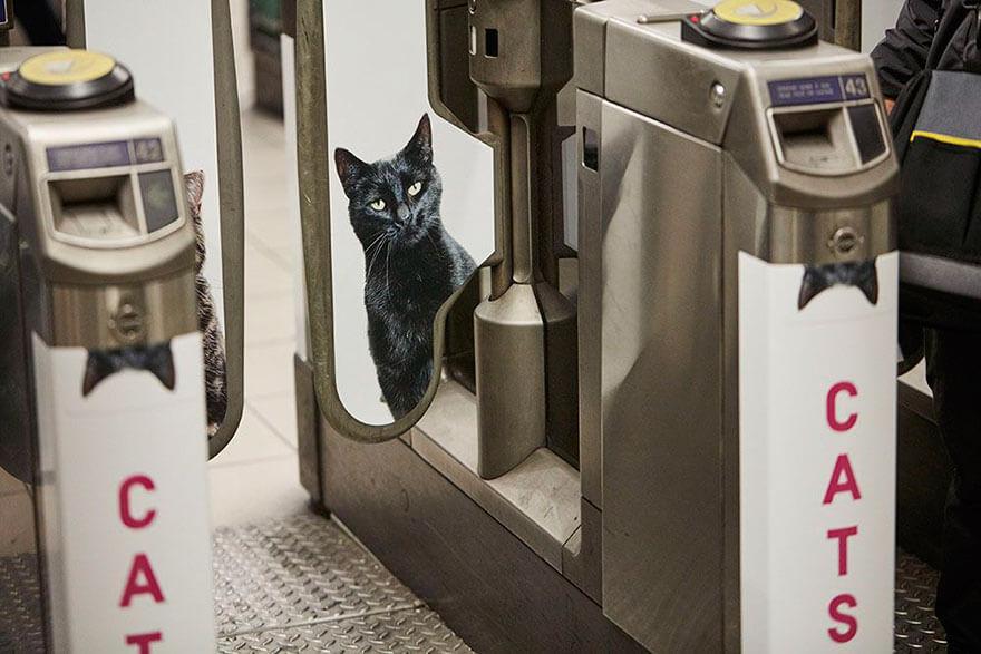 métro de Londres tapissé de chats