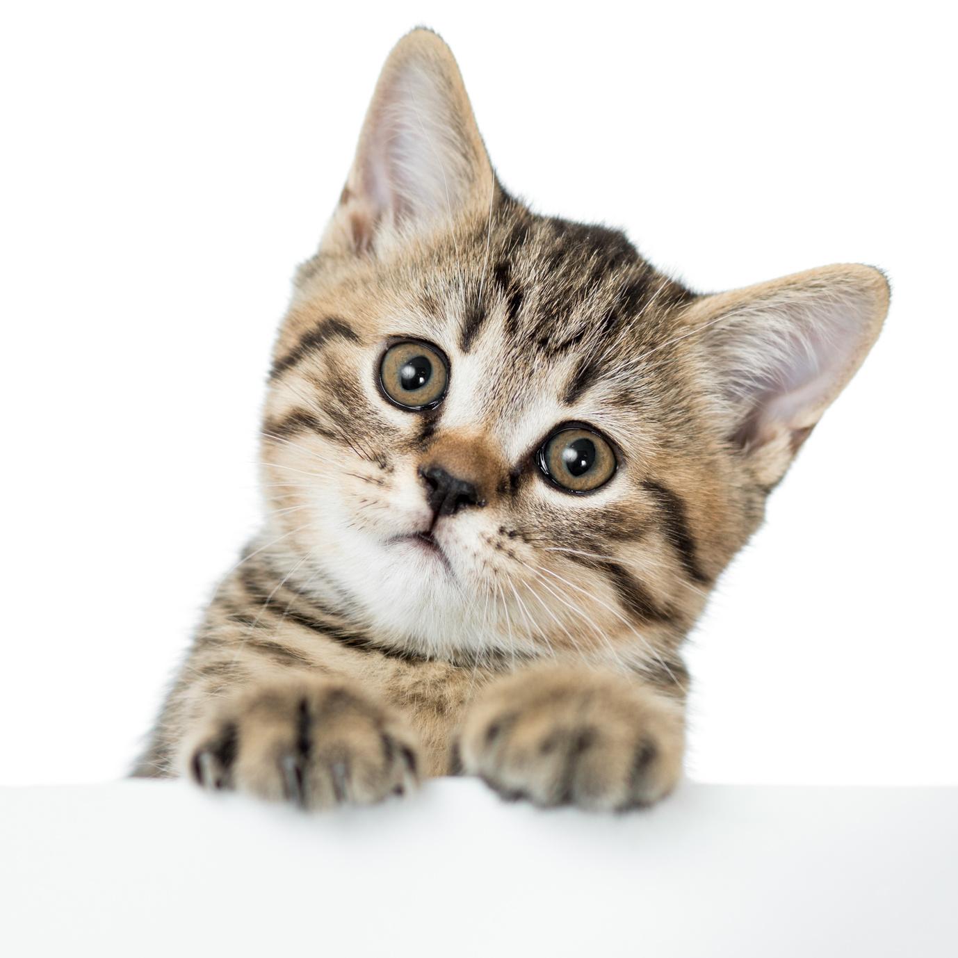 caresser votre chat peut être dangereux