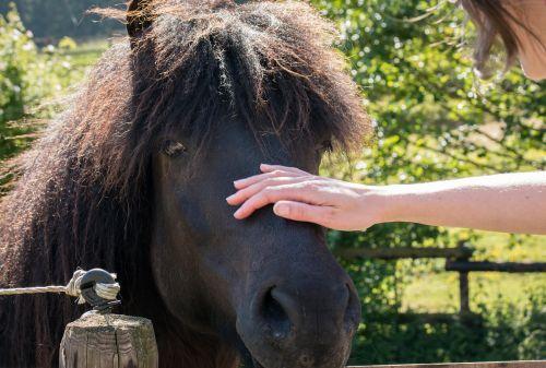 comprendre la douleur chez l'animal