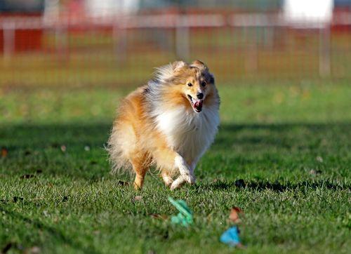 chien activité sportive