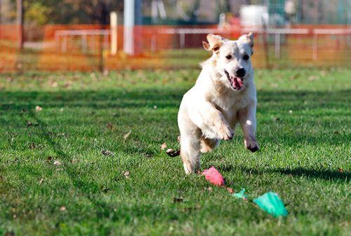 faire courir son chien