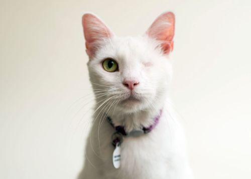 Casey Elise, Blind Cats, Daisy