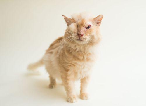 Casey Elise, Blind Cats, Sir Thomas Trueheart