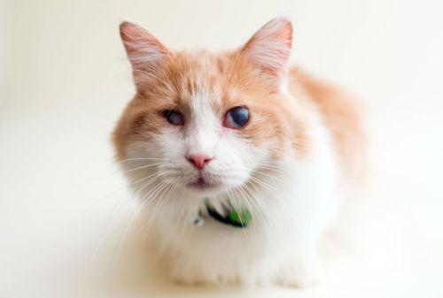 Casey Elise, Blind Cats, Oliver