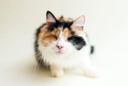 Casey Elise, Blind Cats, Pixie Pawspouncer