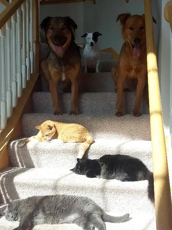 chat dort dans les escaliers