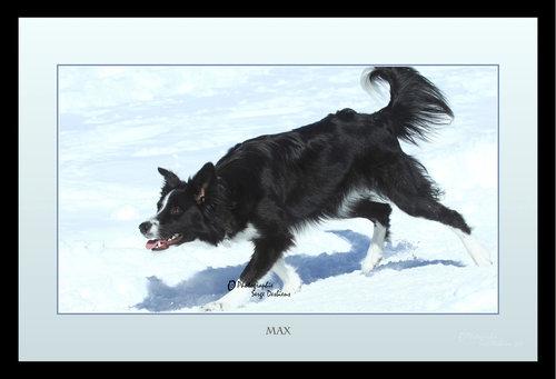 photos animaux chien
