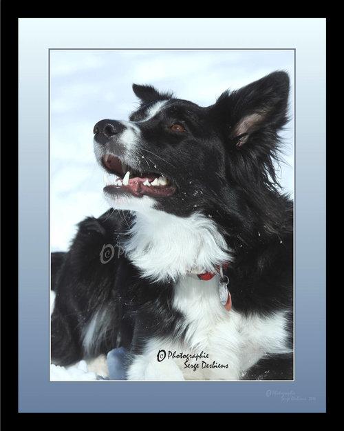 photo chien dans la neige