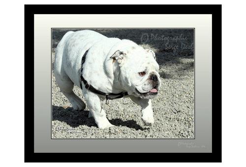 photo de chien
