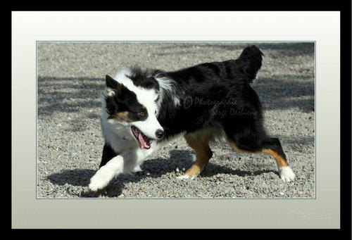photo chien qui joue