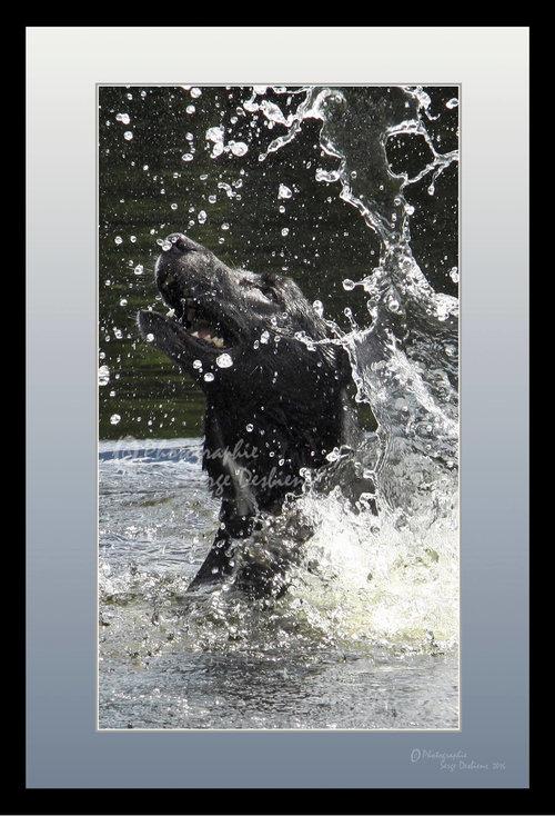 photo chien dans l'eau