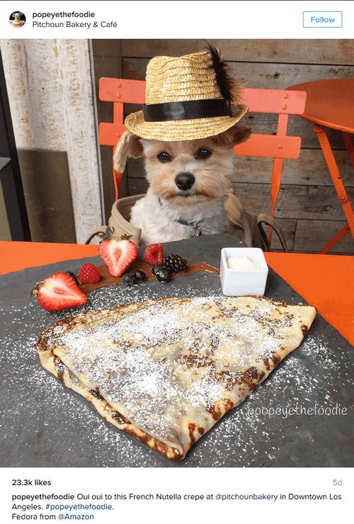 chien Popeye Instagram