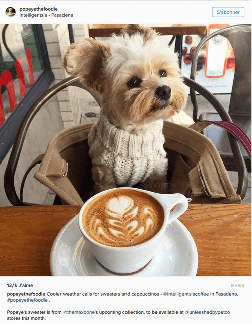 Popey the Foodie Dog devant un café