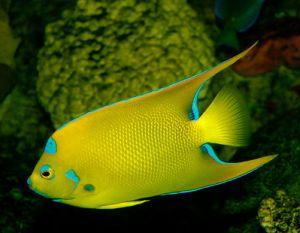 Oppresseurs poisson avec rocher mer l/'eau salée Poisson Poisson personnage Aquarium 21 cm