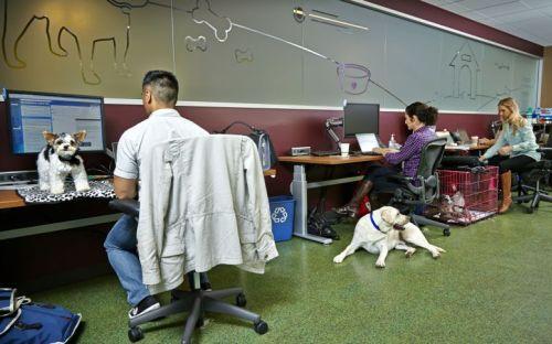 Espace chiens en entreprise