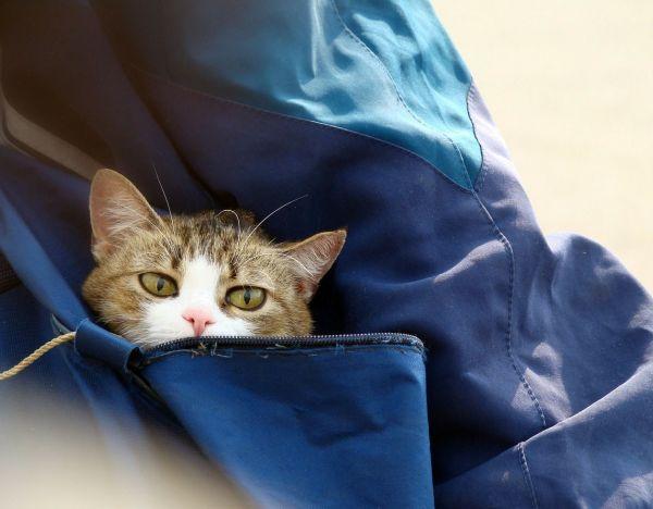 chat dans le sac de voyage