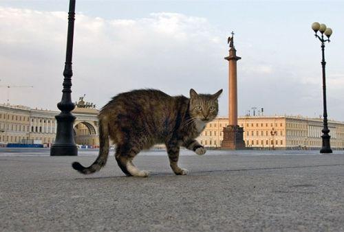 chat au musée d'Ermitage St-Pétersbourg