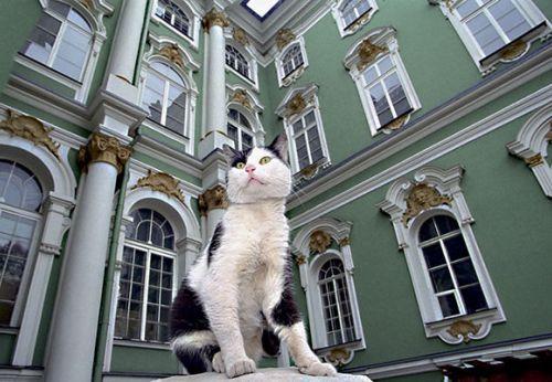 chat gardien du musée de l'Ermitage