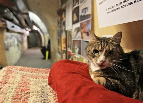 chat gardien du musée