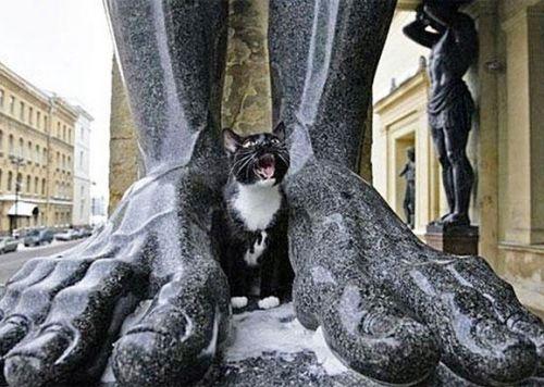 chat de l'Ermitage