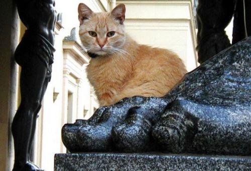 chats du musée de l'Ermitage