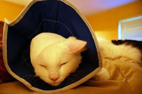 trousse de secours : collerette pour chat