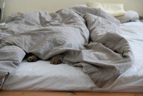 chat dort sous la couette